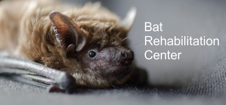 Donate the Bat Rehab Center in Ukraine for help during corona crisis!