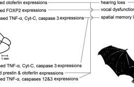 Negative Effekte von Neonicotinoiden auf das Nervensystem der Fledermäuse