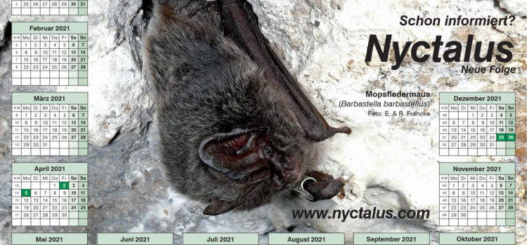 Nyctalus-Kalender zum Download