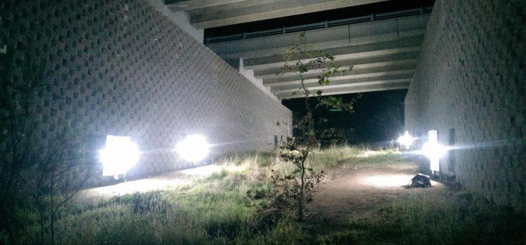 Künstliche Beleuchtung mindert die Nutzung von Querungshilfen für Fledermäuse